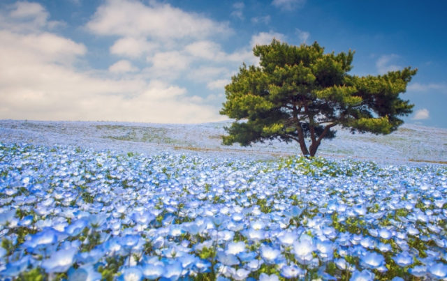 Berlibur Ke Jepang Saat Musim Semi Tengok Dulu 5 Rekomendasi Tempat